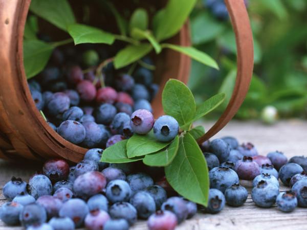 blueberries-600x450