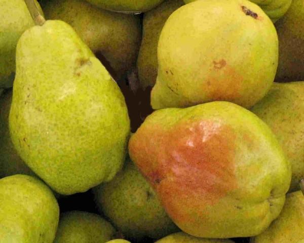 pears-600x480